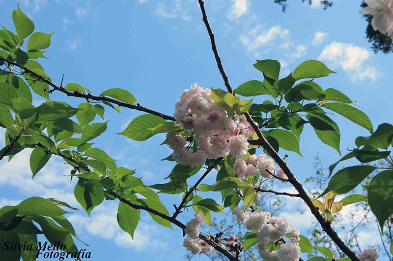 fotos-del-jardin-japones-de-montevideo-5